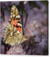 En Garde - Painted Lady - Butterfly Canvas Print