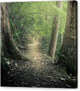 Enchanted Forrest Canvas Print