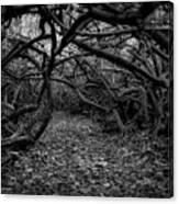 Enchanted Hau Forest Canvas Print