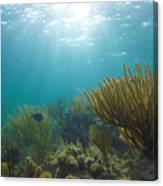 Enchanted Seas Canvas Print