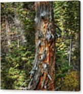 Enchanted Tree Canvas Print