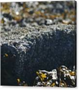 Encrusted Rock Canvas Print