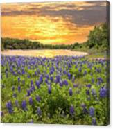 End Of A Bluebonnet Day Canvas Print
