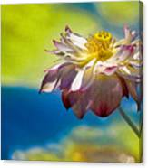 End Of Summer Lotus Canvas Print
