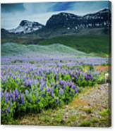 Endless Meadows Canvas Print