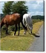 England - Wild Horses Canvas Print