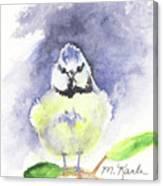English Blue Tit Canvas Print
