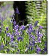English Bluebell Wood Canvas Print