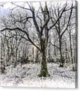 English Forest Snow Art Canvas Print