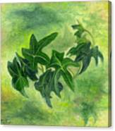 English Ivy Canvas Print