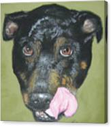 English Staffordshire Bull Terrier  Canvas Print