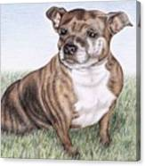 English Staffordshire Terrier Canvas Print