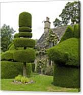 English Yew Topiary Canvas Print