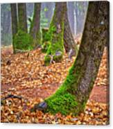 Enjoying The Forest Of Oak Run Canvas Print