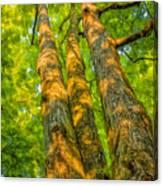 Enlightened Trees Canvas Print