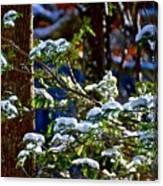 Enlightened Winter Canvas Print