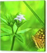 Entre Flors Canvas Print