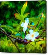 Entwined Chiaroscuro Canvas Print