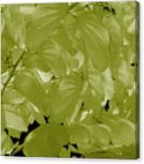 Epiphnay 1 Canvas Print