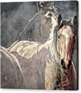 Equine Appearance Canvas Print