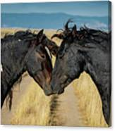 Equine Love Canvas Print