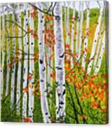 Erin's Birch Trees Canvas Print