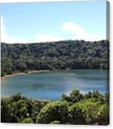 Escalonia Cloud Forest Trail Canvas Print