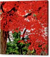 Essence Of Japanese Maple Tree Canvas Print