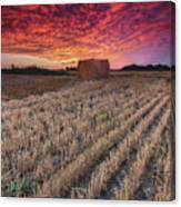 Essex Hay At Sunrise Canvas Print