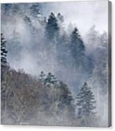 Ethereal Forest - D008248 Canvas Print