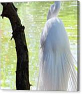 Ethereal Snowy Egret Canvas Print