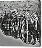 Etosha Pan Reflections Canvas Print