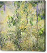 Eucalyptus 013 Canvas Print