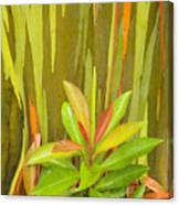 Eucalyptus And Leaves Canvas Print