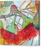 Eucalyptus Flowers Canvas Print