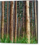 Eucalyptus Forest Canvas Print
