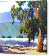 Eucalyptus On The Bluffs Canvas Print