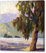 Eucalyptus Sentinel Canvas Print