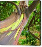Eucalyptus Tree Canvas Print