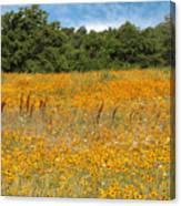 Eufaula Meadow Canvas Print