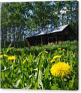 Euphemia Mcnaught Homestead Chicken Coop And Dandelions Canvas Print