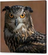 Eurasian Eagle Owl Iv Canvas Print