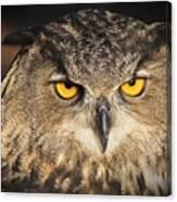 Eurasian Eagle Owl Portrait Canvas Print