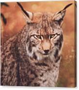 Eurasian Lynx Canvas Print