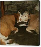 European Cows Canvas Print