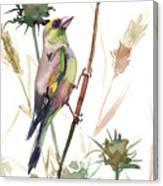 European Goldfinch In The Field Canvas Print