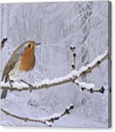 European Robin On Snowy Branch Canvas Print