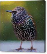 European Starling - Painted Canvas Print
