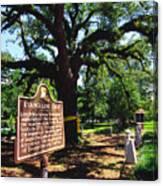 Evangeline Oak St Martinville Louisiana Canvas Print