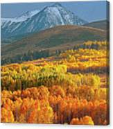 Evening Aspen Canvas Print